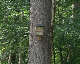 Parc Mawr, Newborough Forest