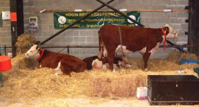 Anglesey Agricultural Show