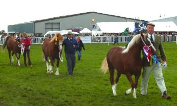 Anglesey Show Proud Winners