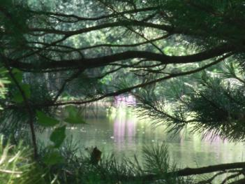 Llyn Parc Mawr, Newborough Forest