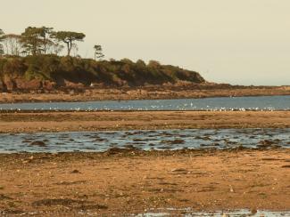 Dulas Bay Reef