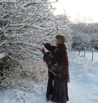 Collecting snow from wild crab apple