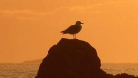 Dave the Seagull Surveys his Kingdom