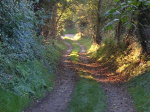 Dulas Autumn Track