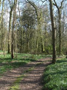 Llys Dulas Woodland, Dulas Anglesey