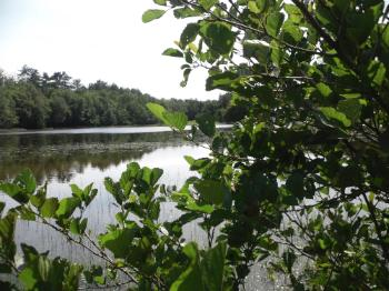 Llyn Parc Mawr - Newborough Forest