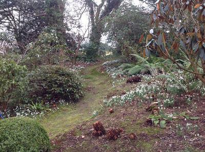 Plas Cadnant Hidden Gardens Spring Snowdrop Field