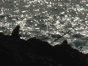 Fishing in Spangly Sunshine