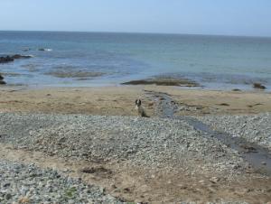Porth Trwyn Beach on Anglesey