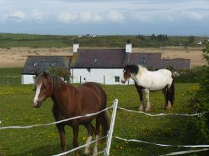 Anglesey Ragwort Munchers