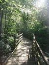 Nant y Pandy Dingle Nature Reserve Boardwalk Llangefni