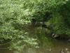 Nant y Pandy Nature Reserve - River Cefni Llangefni