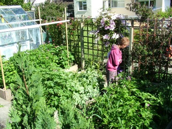 Wendy Steele's Vegetable Garden