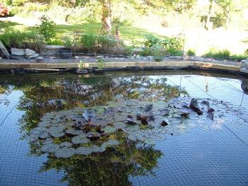 Wendy Steele's Frog & Froglette Pond