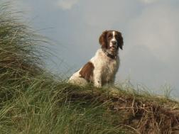 Doggie on a Dune