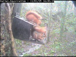 www.anglesey-hidden-gem.com - Red Squirrels - The Eyes have it