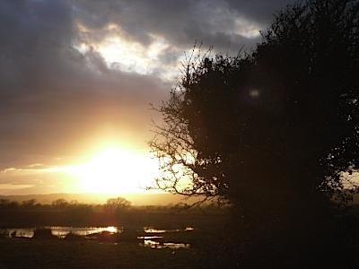 Marshland Winter Sunset