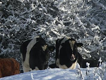 Christmas Message - Anglesey