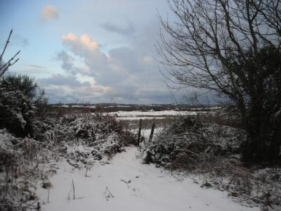 Anglesey Snow