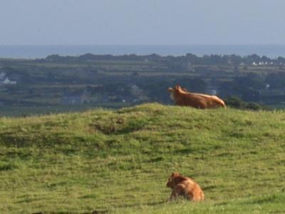 Anglesey Buccolic Paradise