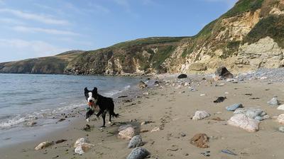 Church Bay Doggie at full tilt