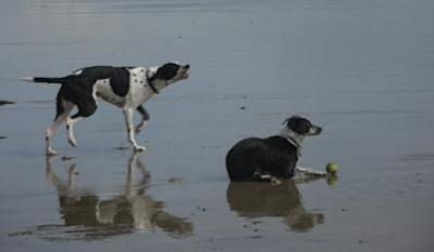 Best Mates on Broad Beach at Rhosneigr, Anglesey