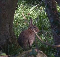 Llys Dulas Camouflaged 