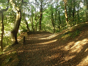 Coed Cyrnol Woods Autumn Walk Menai Bridge