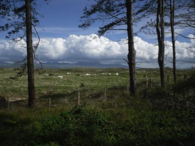 Llanddwyn - Newborough Warren, Anglesey