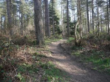 Newborough Forest Path - Anglesey Hidden Gem.com