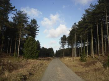 Newborough Forest Road Down To Llanddwyn Island