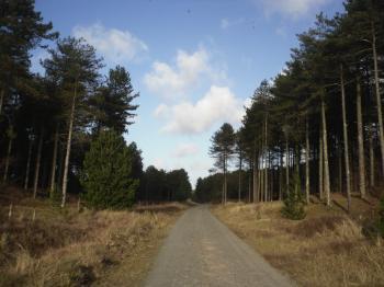 Newborough Forest Road Down To Llanddwyn Island