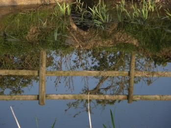 Cors Ddryga - Malltraeth Marsh Today