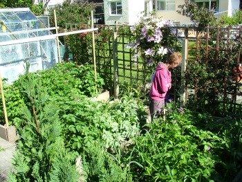 Wendy Steele's Vegetable Garden