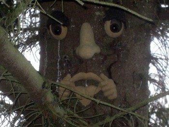 Wendy's Reflective Woodland Friend